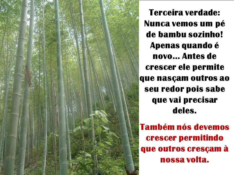 Terceira verdade: Nunca vemos um pé de bambu sozinho