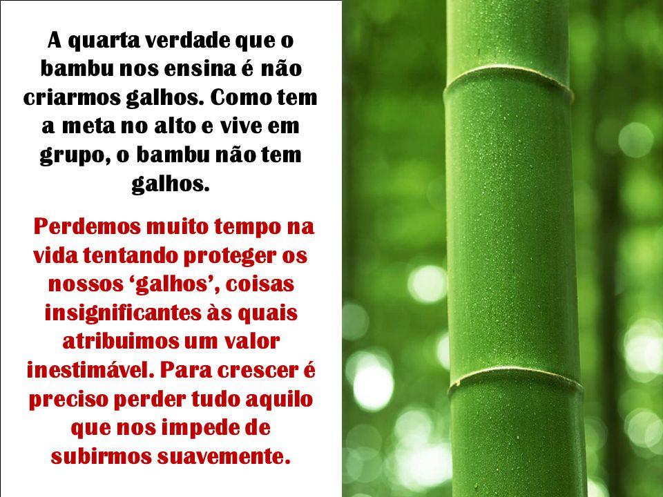 A quarta verdade que o bambu nos ensina é não criarmos galhos