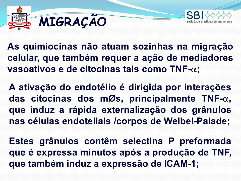 MIGRAÇÃO As quimiocinas não atuam sozinhas na migração celular, que também requer a ação de mediadores vasoativos e de citocinas tais como TNF-a;
