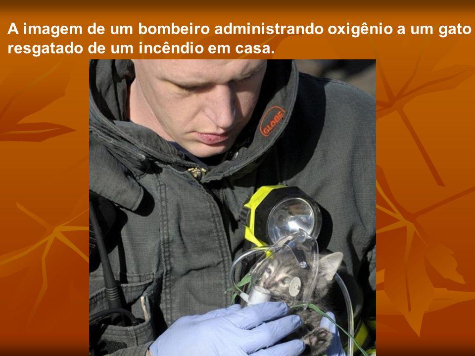 A imagem de um bombeiro administrando oxigênio a um gato resgatado de um incêndio em casa.