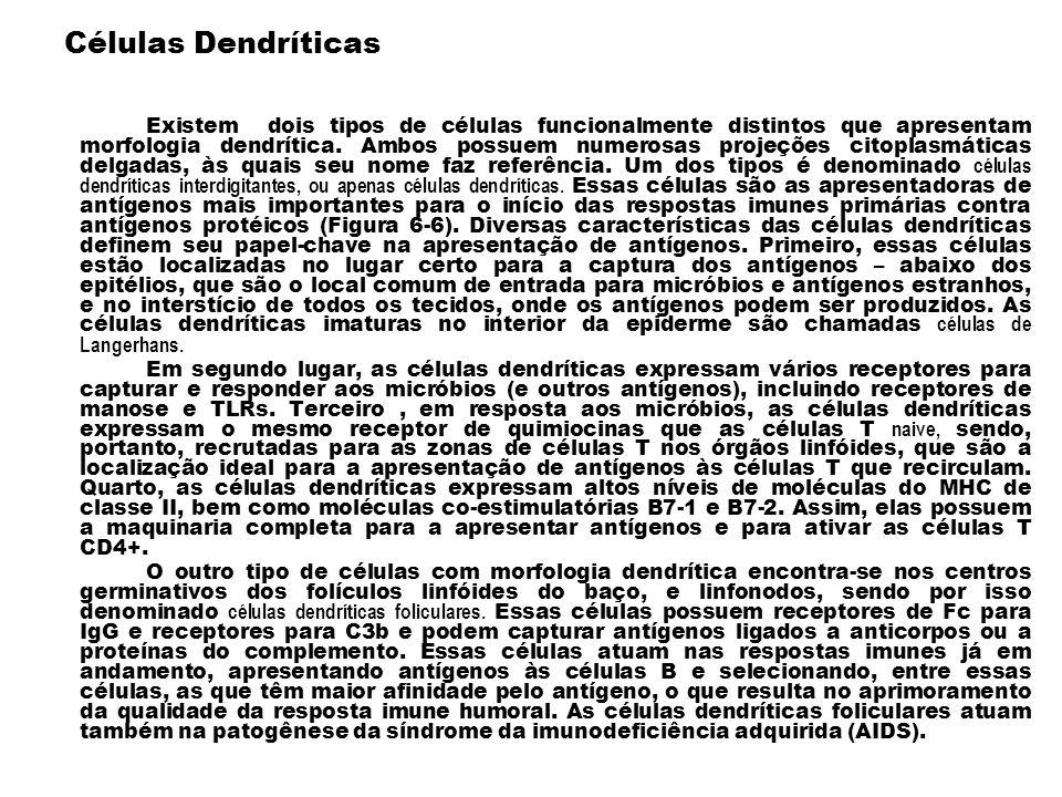 Células Dendríticas