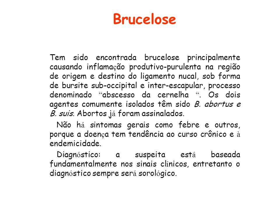 Brucelose
