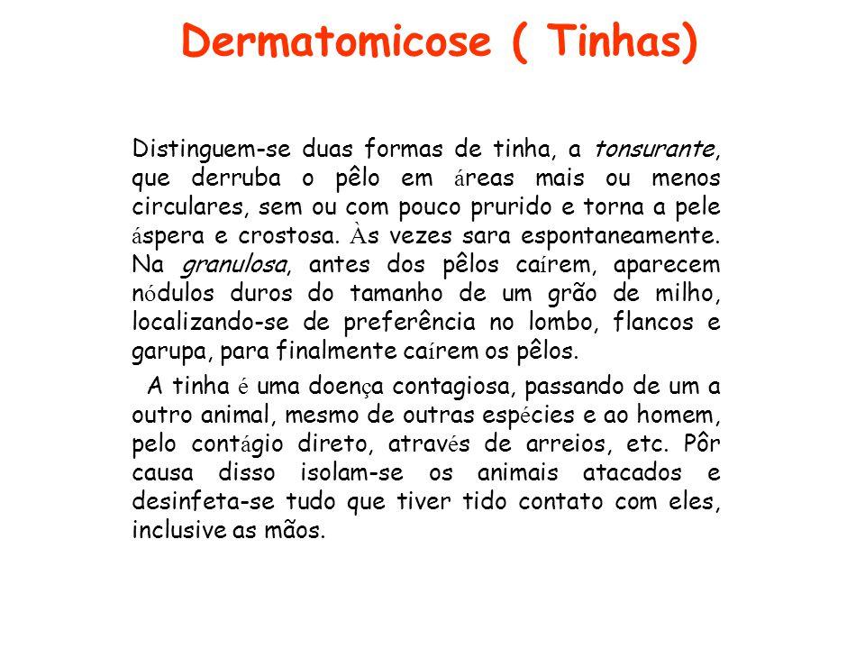 Dermatomicose ( Tinhas)