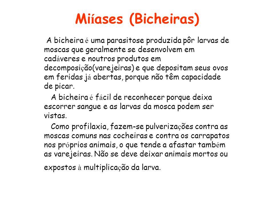 Miíases (Bicheiras)