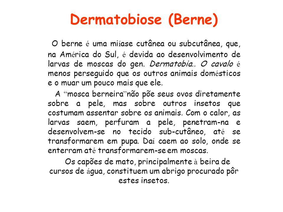 Dermatobiose (Berne)