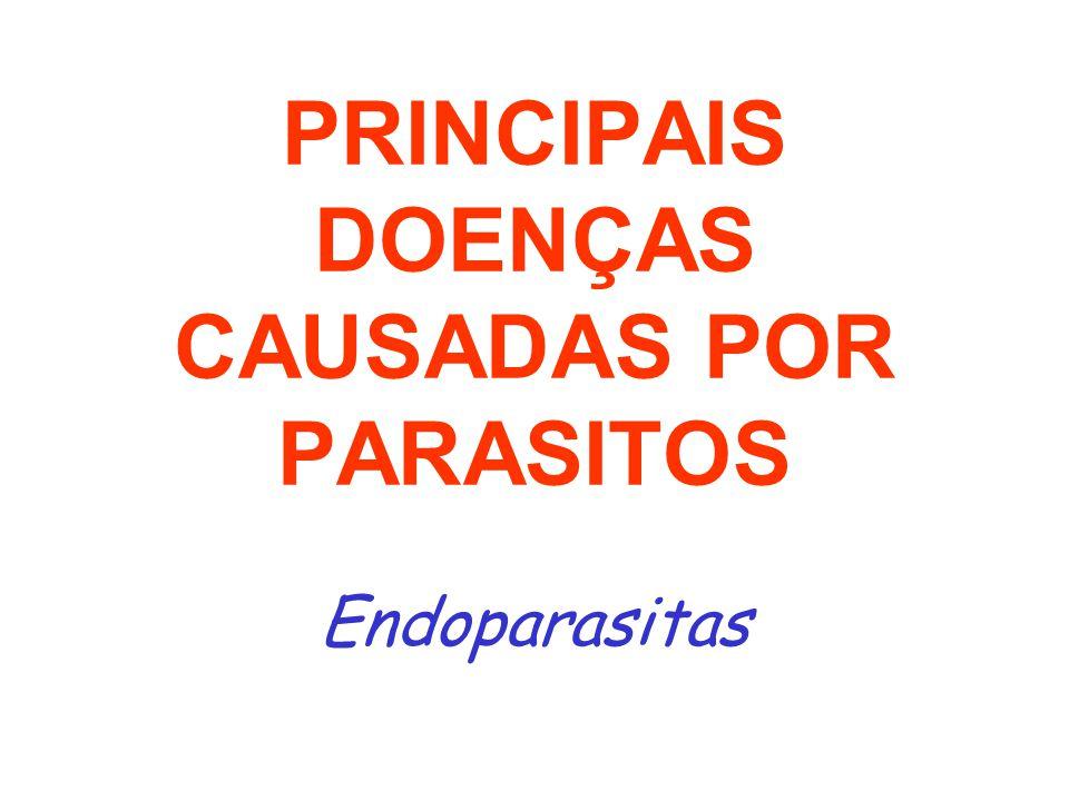 PRINCIPAIS DOENÇAS CAUSADAS POR PARASITOS Endoparasitas