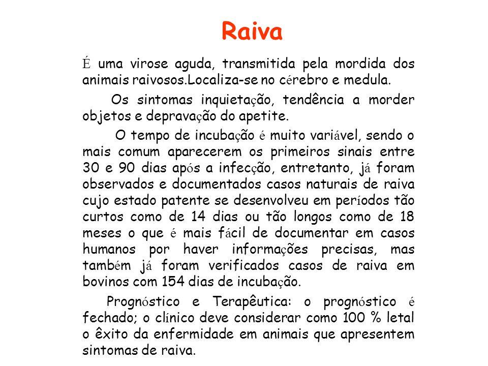 Raiva É uma virose aguda, transmitida pela mordida dos animais raivosos.Localiza-se no cérebro e medula.