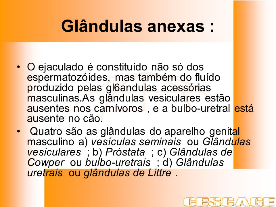 Glândulas anexas :