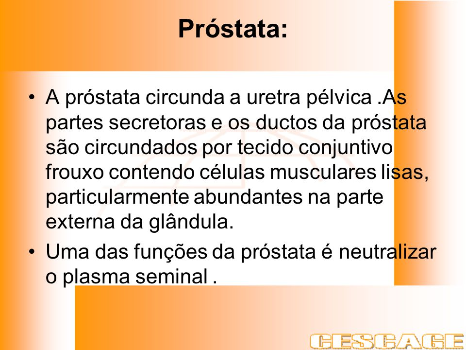 Próstata: