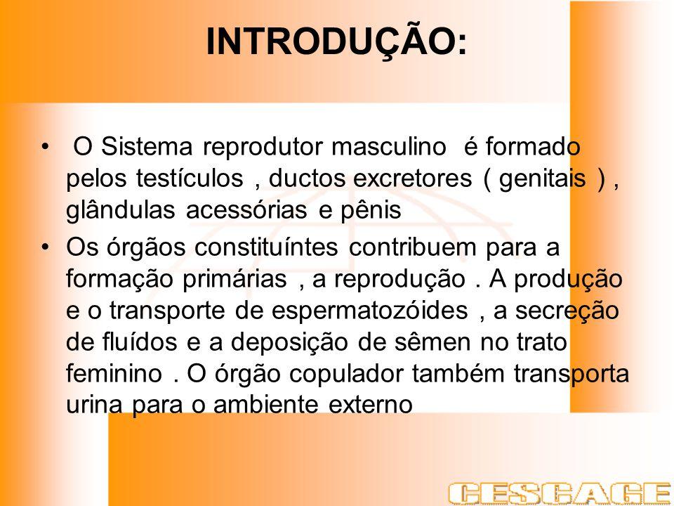 INTRODUÇÃO: O Sistema reprodutor masculino é formado pelos testículos , ductos excretores ( genitais ) , glândulas acessórias e pênis.