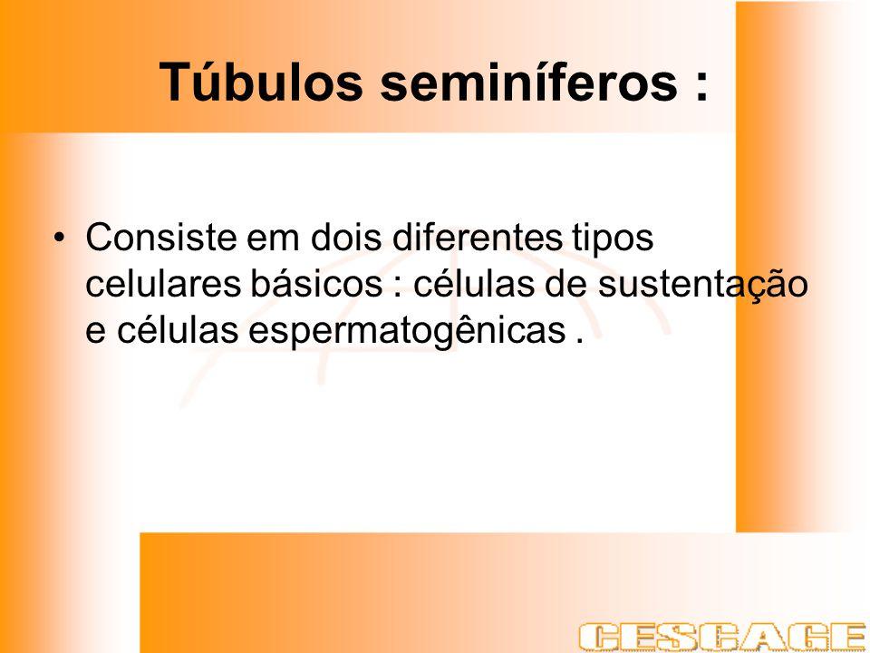Túbulos seminíferos : Consiste em dois diferentes tipos celulares básicos : células de sustentação e células espermatogênicas .