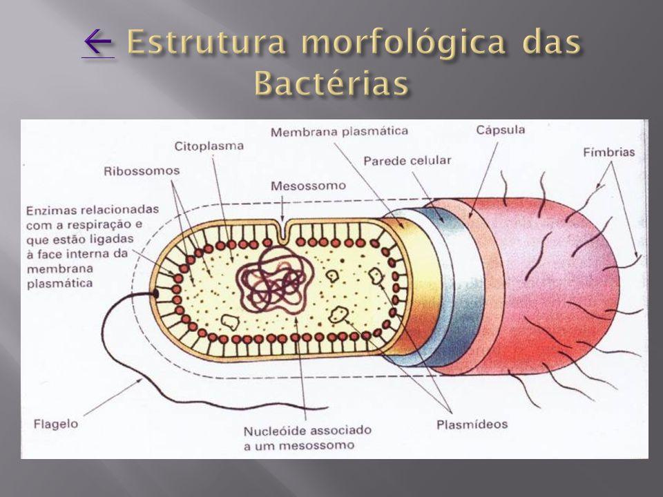  Estrutura morfológica das Bactérias