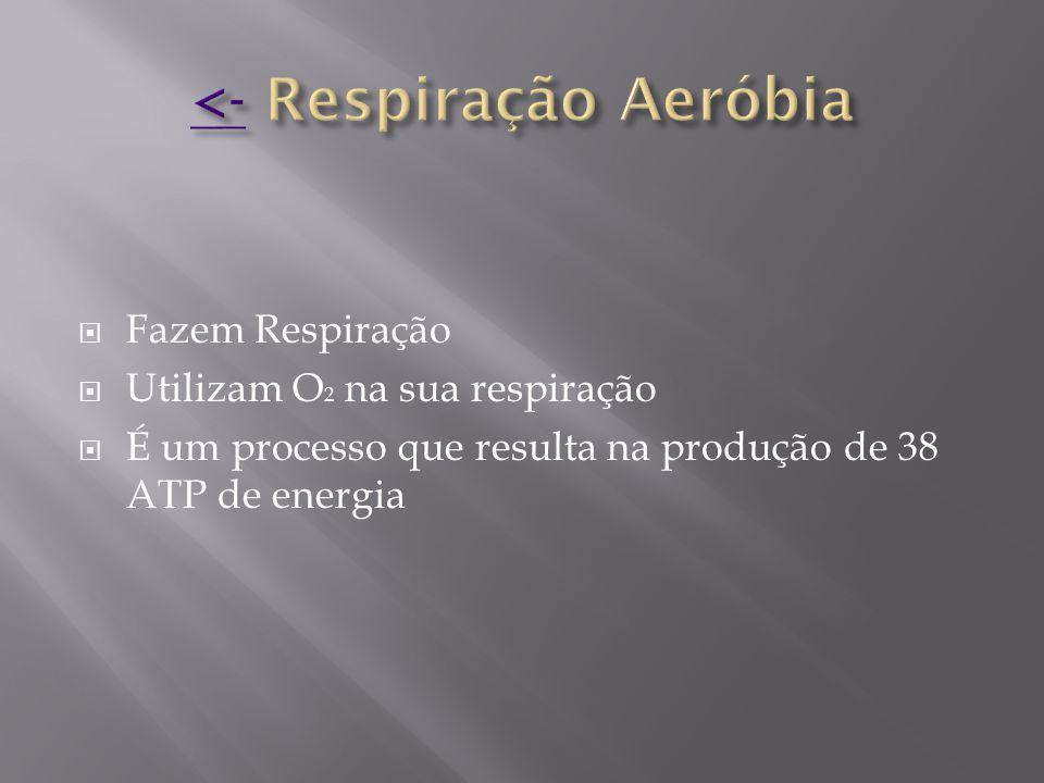 <- Respiração Aeróbia