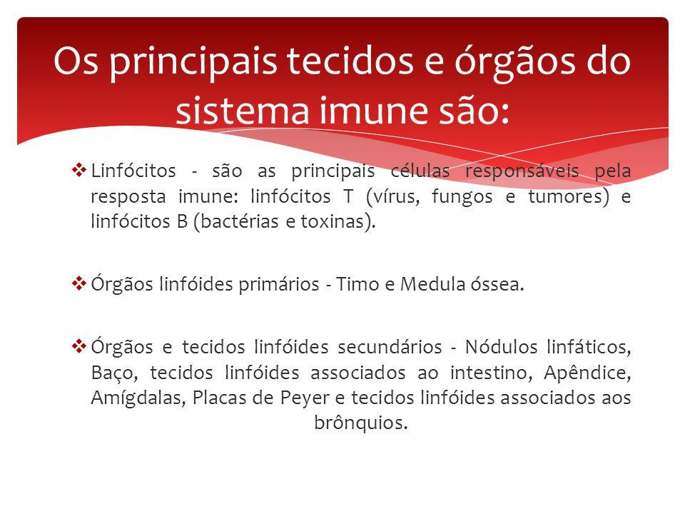 Os principais tecidos e órgãos do sistema imune são: