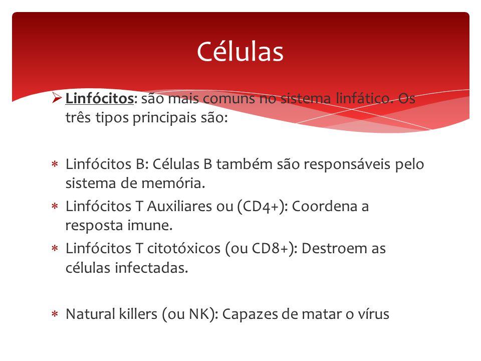 Células Linfócitos: são mais comuns no sistema linfático. Os três tipos principais são:
