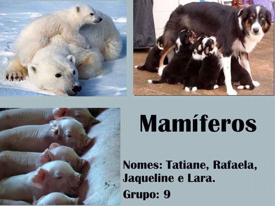Nomes: Tatiane, Rafaela, Jaqueline e Lara. Grupo: 9