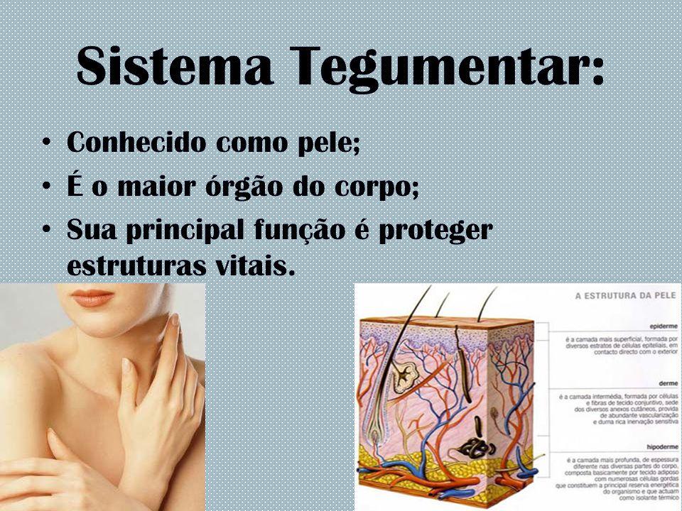 Sistema Tegumentar: Conhecido como pele; É o maior órgão do corpo;