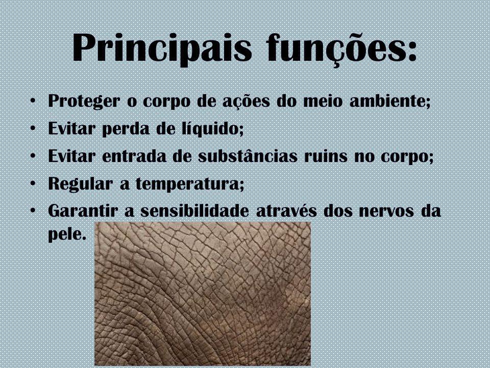 Principais funções: Proteger o corpo de ações do meio ambiente;
