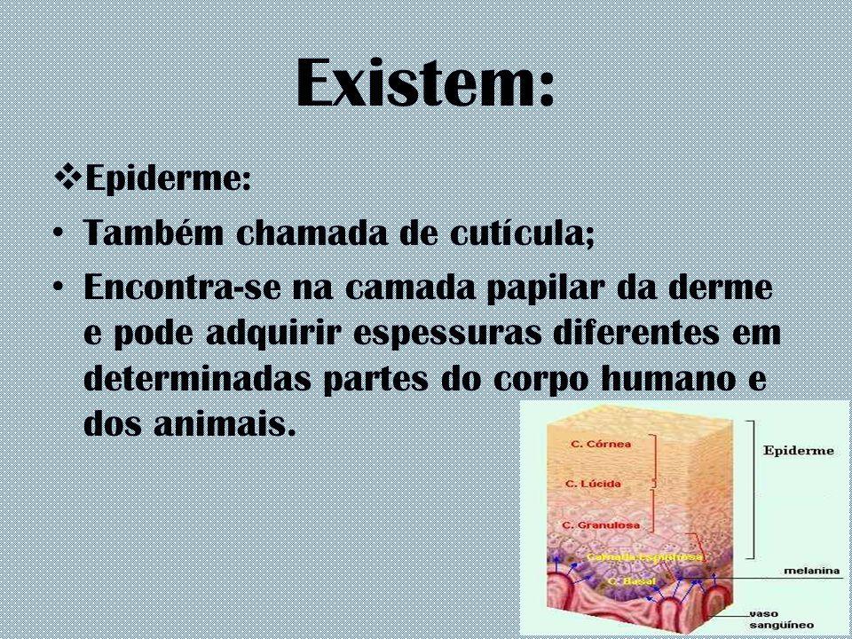 Existem: Epiderme: Também chamada de cutícula;