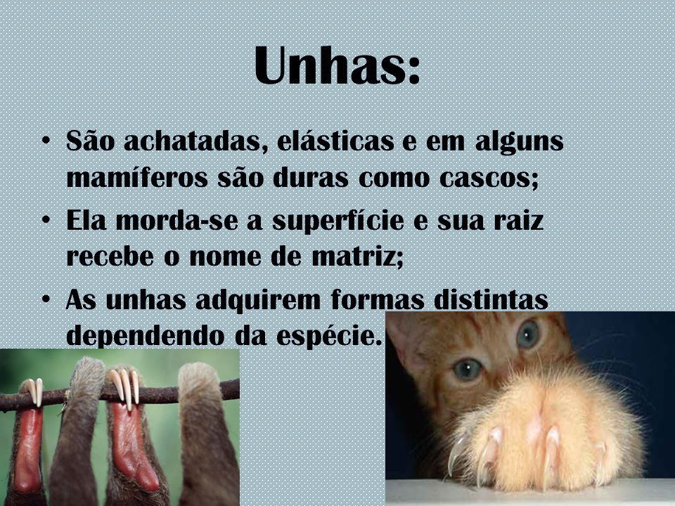 Unhas: São achatadas, elásticas e em alguns mamíferos são duras como cascos; Ela morda-se a superfície e sua raiz recebe o nome de matriz;