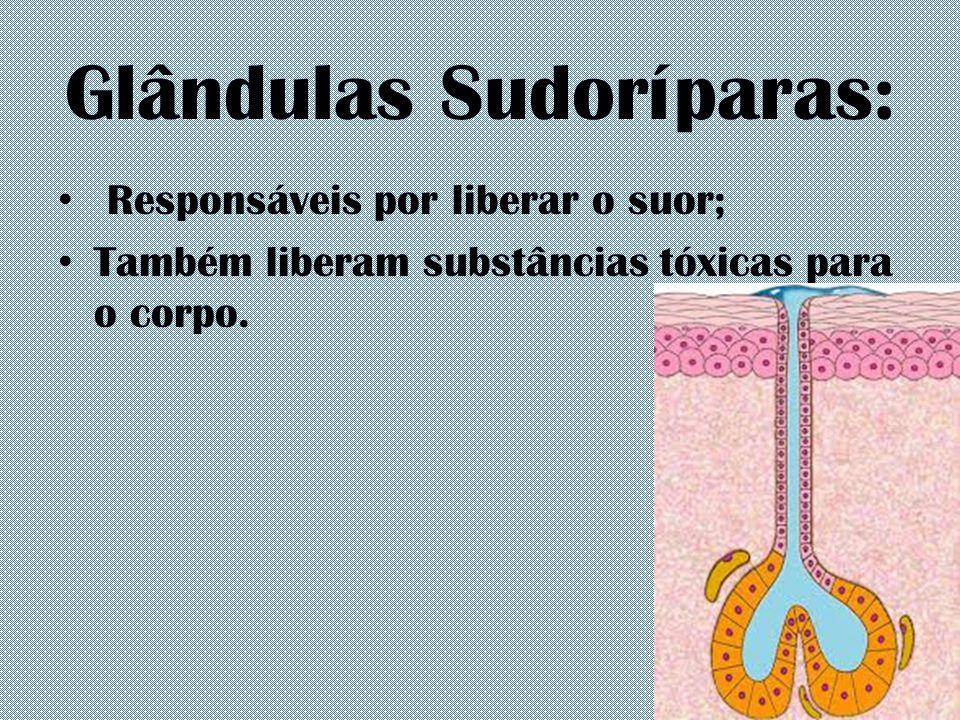 Glândulas Sudoríparas: