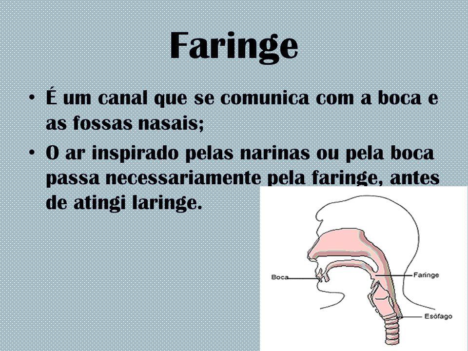 Faringe É um canal que se comunica com a boca e as fossas nasais;
