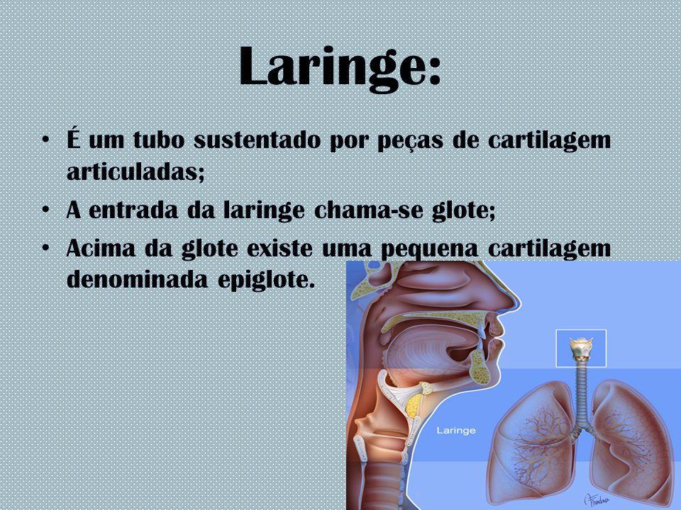Laringe: É um tubo sustentado por peças de cartilagem articuladas;