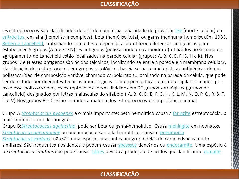 CLASSIFICAÇÃO CLASSIFICAÇÃO