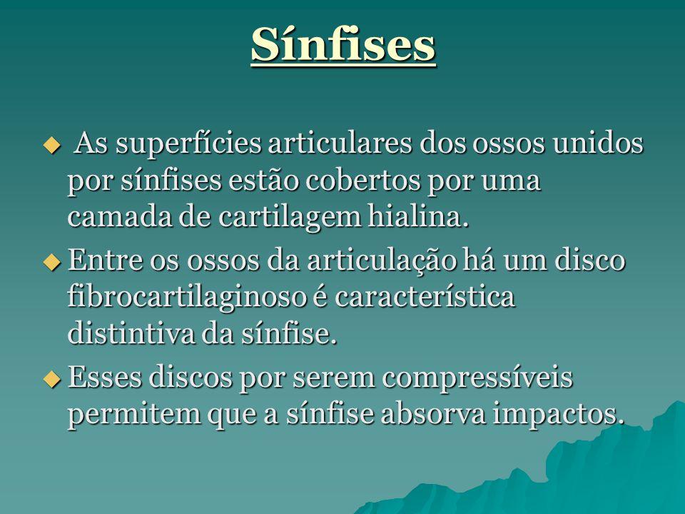 Sínfises As superfícies articulares dos ossos unidos por sínfises estão cobertos por uma camada de cartilagem hialina.