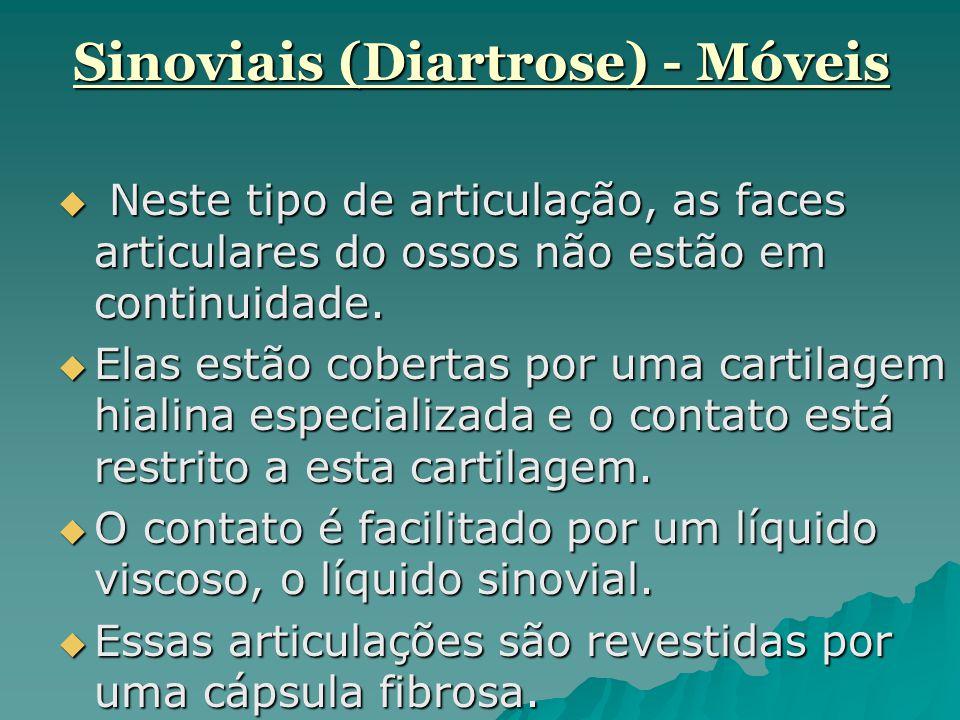 Sinoviais (Diartrose) - Móveis