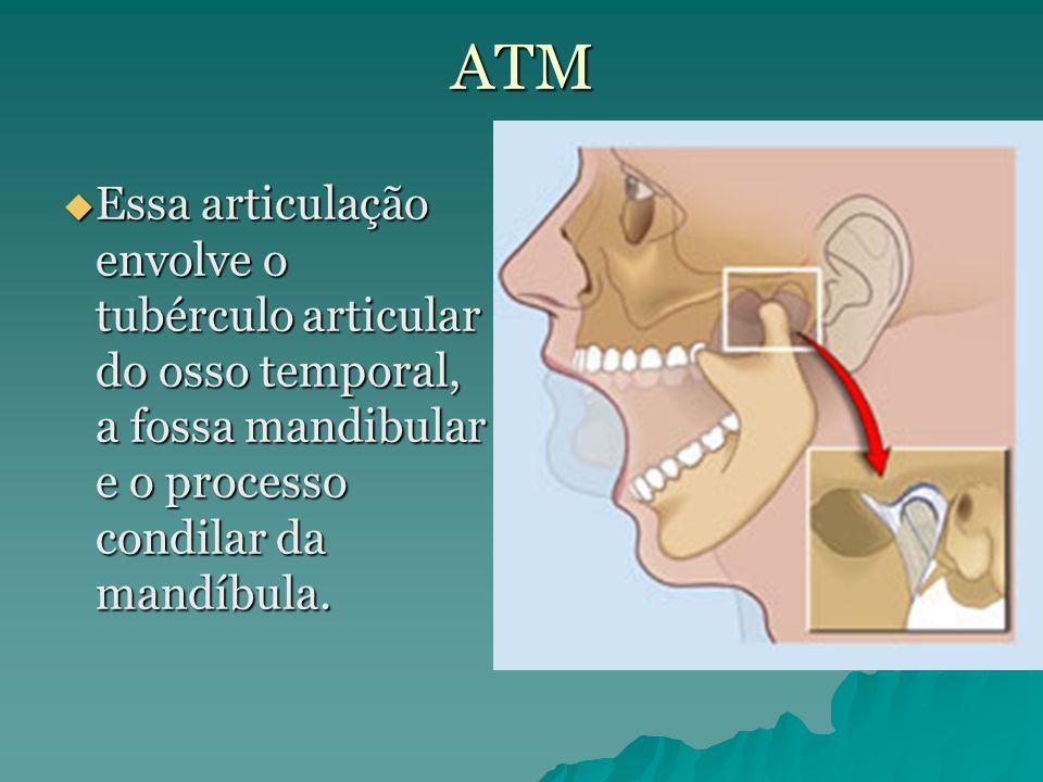 ATM Essa articulação envolve o tubérculo articular do osso temporal, a fossa mandibular e o processo condilar da mandíbula.