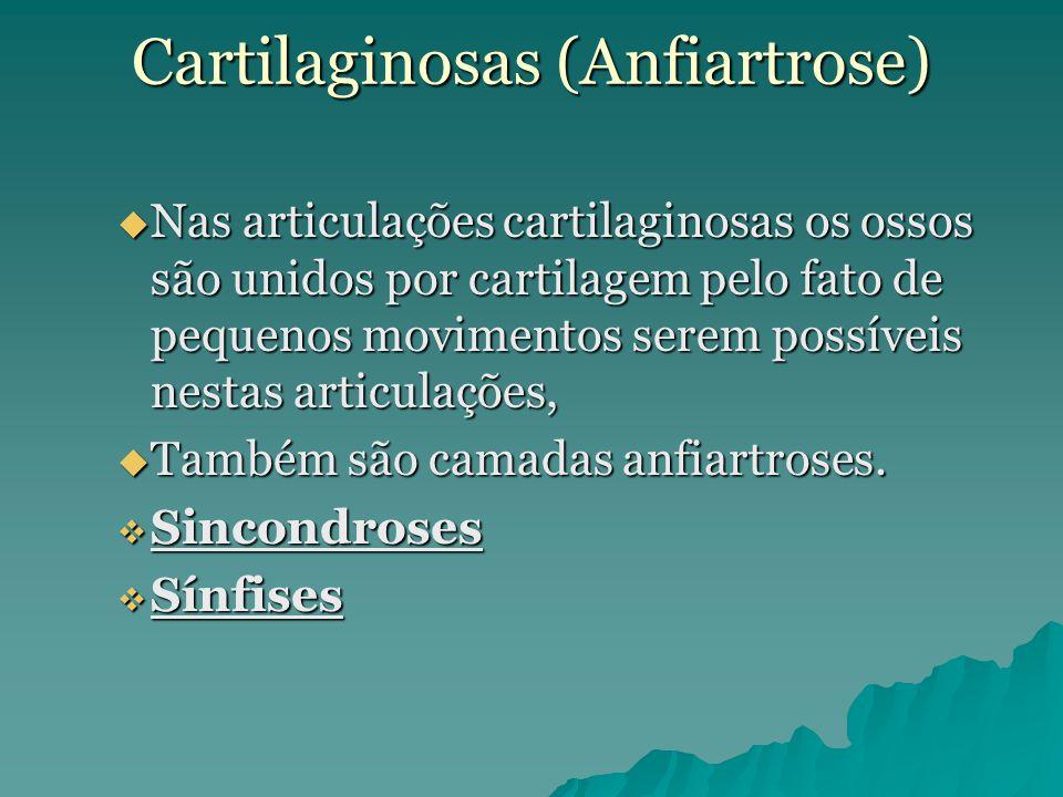 Cartilaginosas (Anfiartrose)