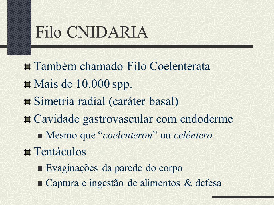 Filo CNIDARIA Também chamado Filo Coelenterata Mais de 10.000 spp.