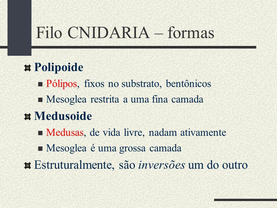 Filo CNIDARIA – formas Polipoide Medusoide