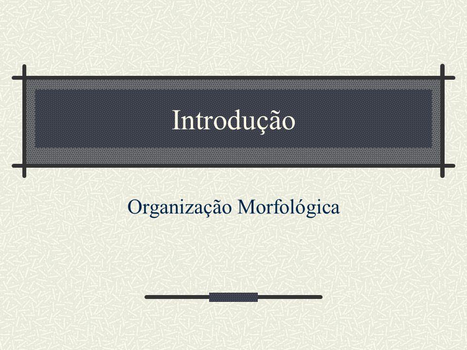 Organização Morfológica