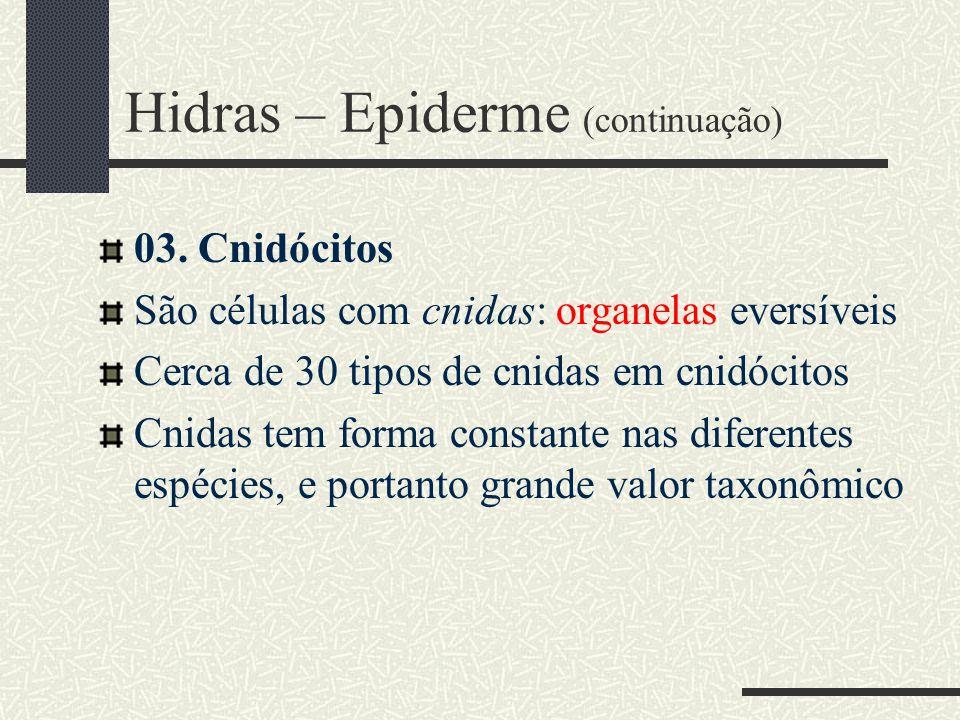 Hidras – Epiderme (continuação)