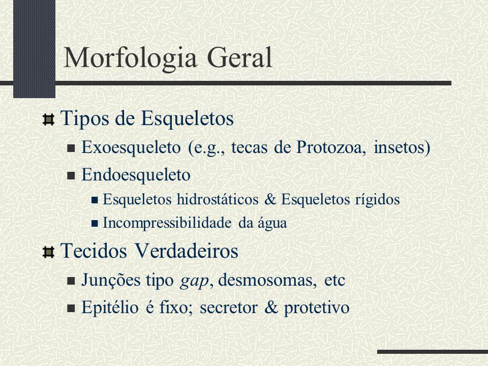 Morfologia Geral Tipos de Esqueletos Tecidos Verdadeiros