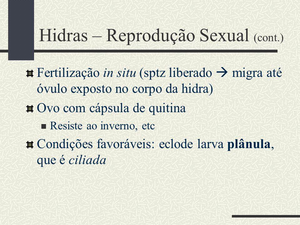 Hidras – Reprodução Sexual (cont.)
