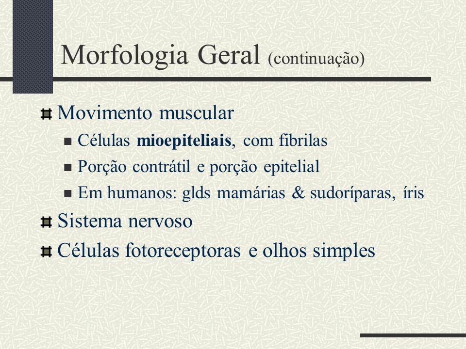 Morfologia Geral (continuação)