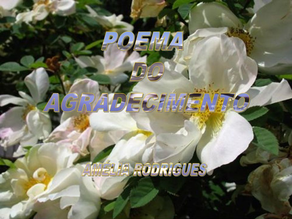 POEMA DO AGRADECIMENTO AMÉLIA RODRIGUES