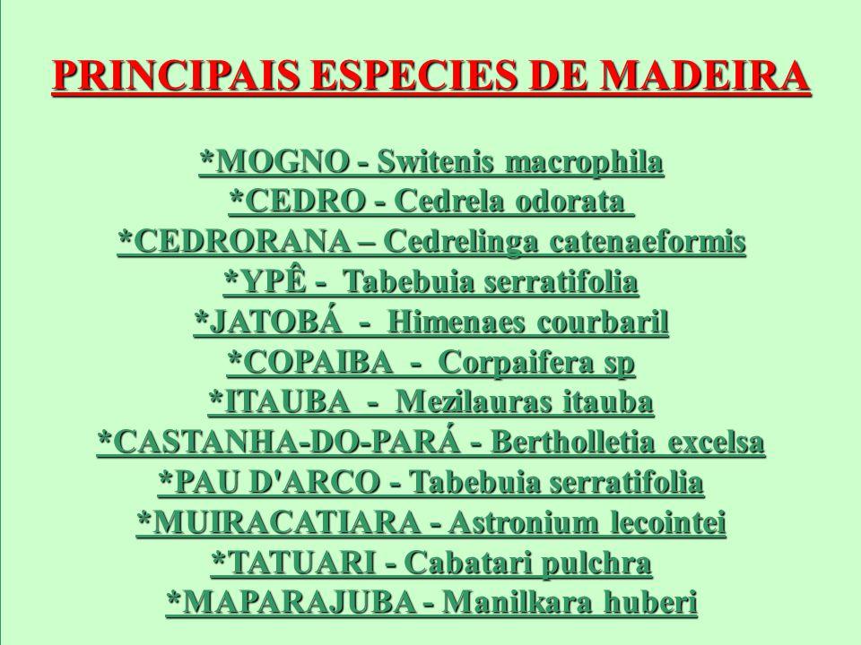 PRINCIPAIS ESPECIES DE MADEIRA