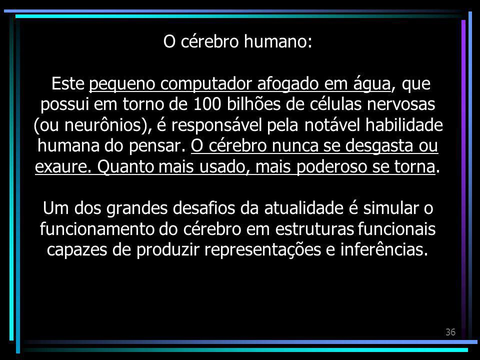 O cérebro humano: Este pequeno computador afogado em água, que possui em torno de 100 bilhões de células nervosas (ou neurônios), é responsável pela notável habilidade humana do pensar.