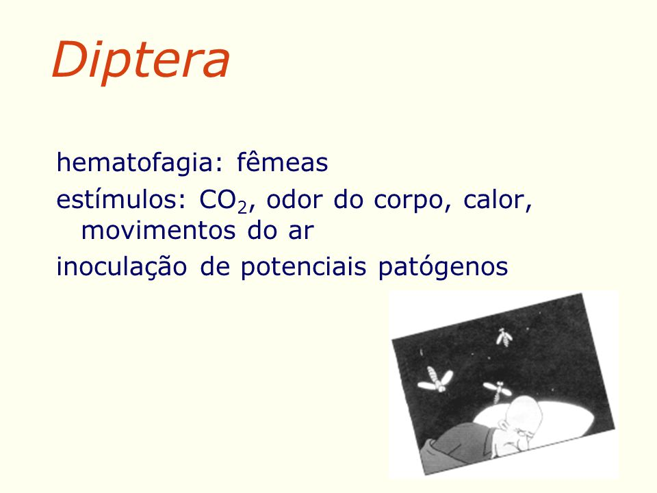 Diptera hematofagia: fêmeas