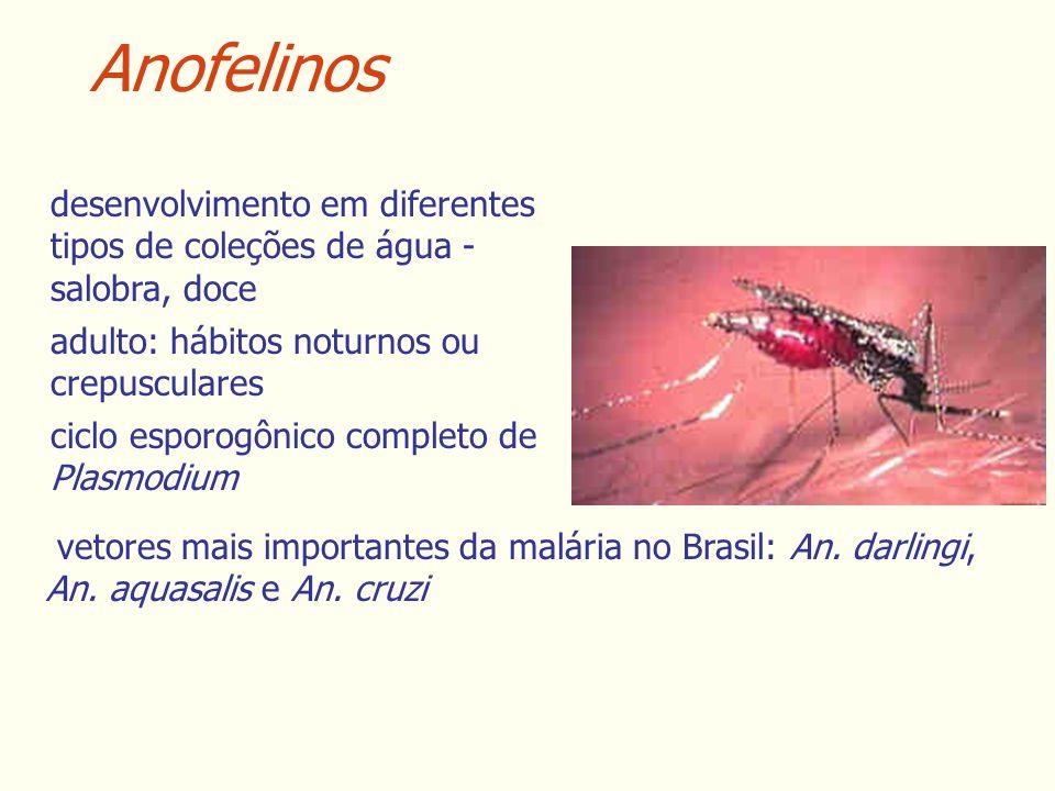 Anofelinos desenvolvimento em diferentes tipos de coleções de água - salobra, doce. adulto: hábitos noturnos ou crepusculares.