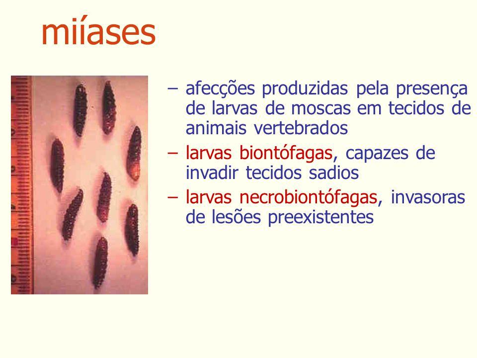 miíases afecções produzidas pela presença de larvas de moscas em tecidos de animais vertebrados.