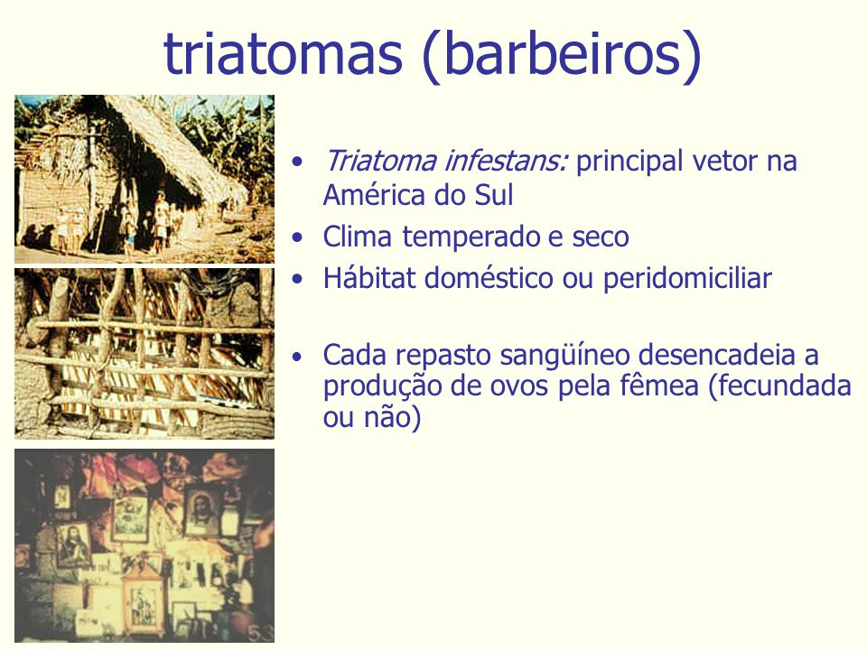 triatomas (barbeiros)