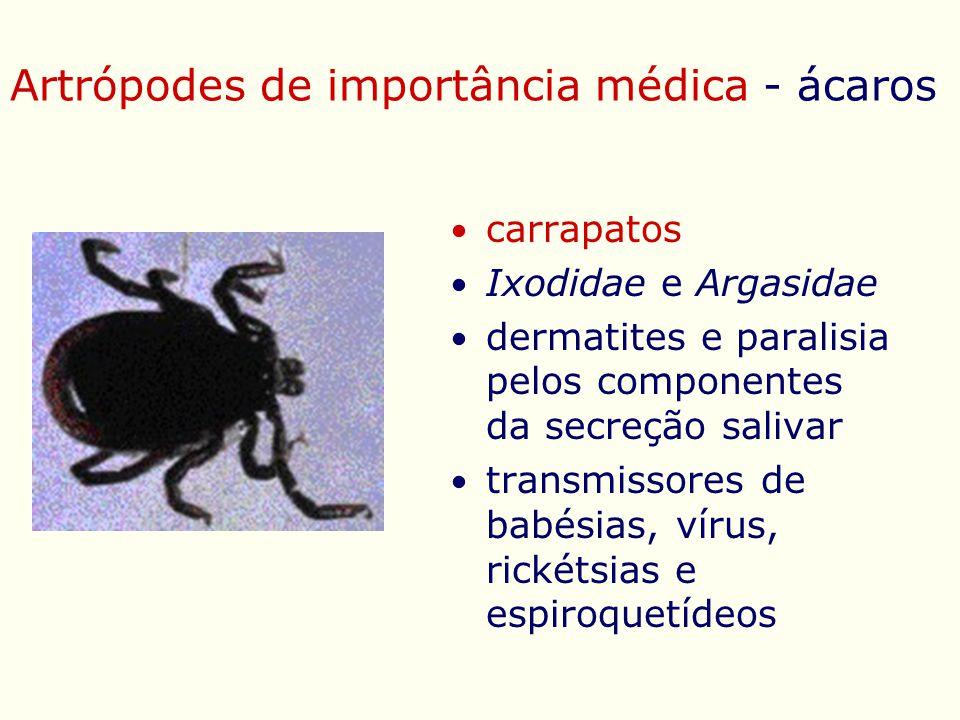 Artrópodes de importância médica - ácaros