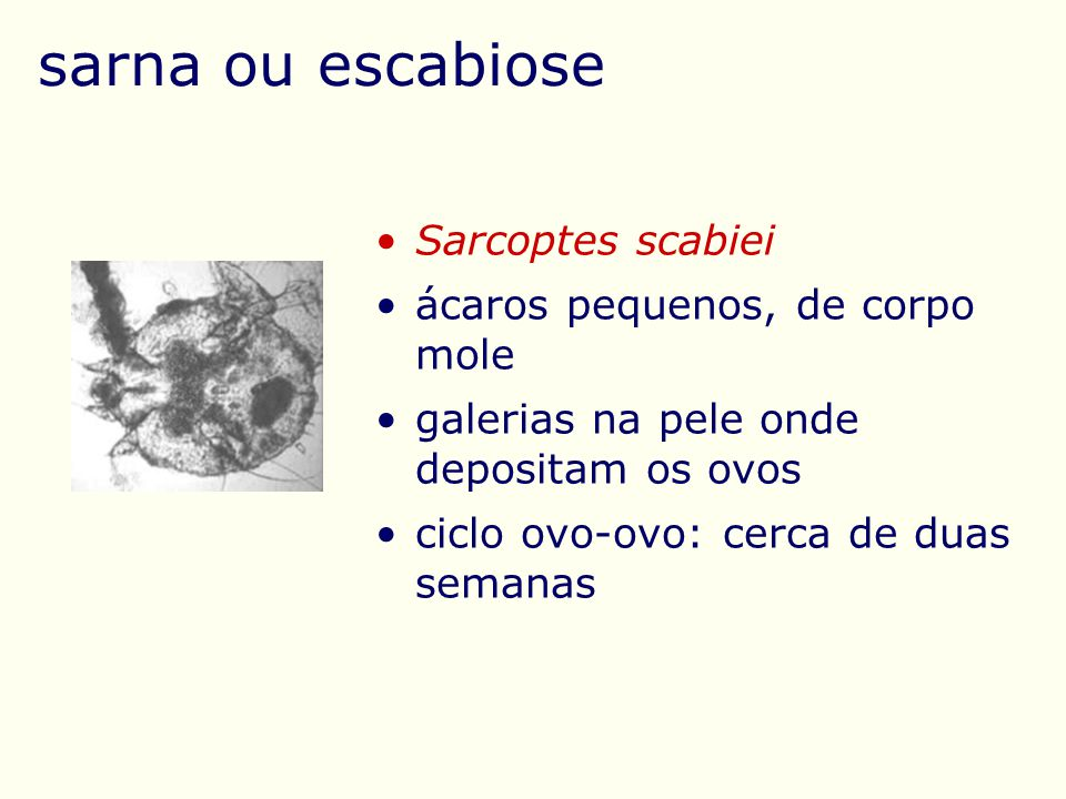 sarna ou escabiose Sarcoptes scabiei ácaros pequenos, de corpo mole