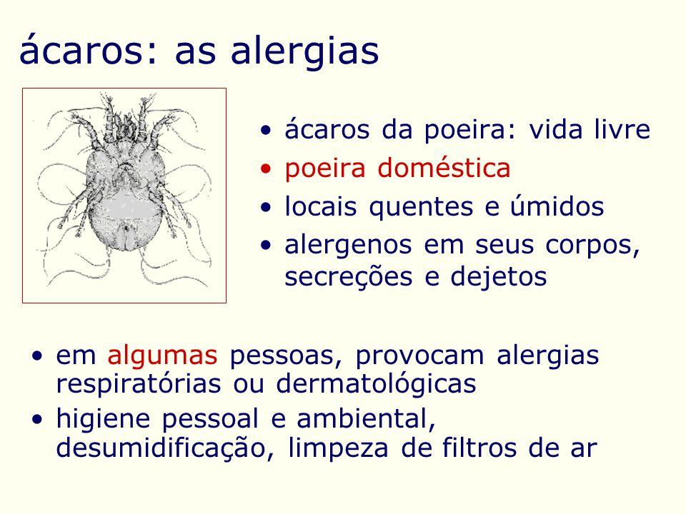 ácaros: as alergias ácaros da poeira: vida livre poeira doméstica