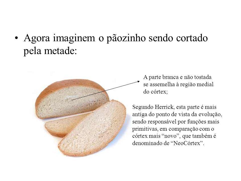 Agora imaginem o pãozinho sendo cortado pela metade: